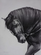 Pony Drawings - Paso Fino by Harvie Brown