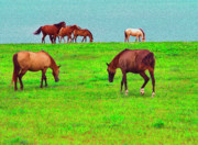 Paso Fino Horses Graze By Seaside Print by Thomas R Fletcher