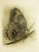 Drypoint Prints - Passage to Pupate III Print by Beth Dennis