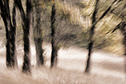 Blurry Prints - Passing by Trees Print by Carol Leigh
