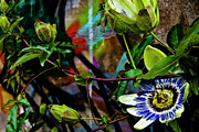 Passion Photo Posters - Passion Flower Graffiti Poster by Grebo Gray