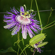 Passionflower Digital Art Posters - Passion Flower Poster by Laura Greene