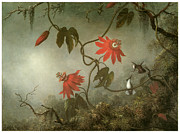 Hummingbird Painting Prints - Passion Flowers and Hummingbirds Print by Martin Johnson Heade