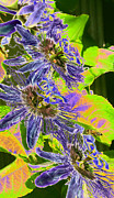 Purple Pyrography Metal Prints - Passion Flowers with Honey Bee Metal Print by Olivia Novak