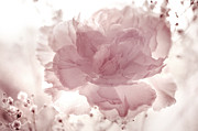 Pearly Posters - Passion for Flowers. Delicate Touch Poster by Jenny Rainbow
