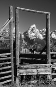 Jackson Hole Framed Prints - Past Its Time Framed Print by Sandra Bronstein