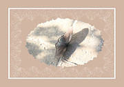Morph Framed Prints - Pastel Butterfly Framed Print by Rosalie Scanlon