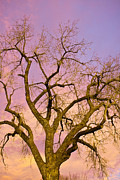 Photography Abstracts Prints - Pastel Cottonwood Sky Print by James Bo Insogna