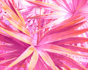 Frond Posters - Pastel Dream in Pink Poster by Susanne Van Hulst