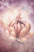Photoshop Cs5 Digital Art Posters - Pastel Flower Poster by Lee-Anne Rafferty-Evans