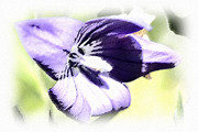 Susan Leggett Framed Prints - Pastel Iris Framed Print by Susan Leggett