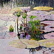 Lily Pond Originals - Pastel Light by John Lautermilch