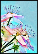 Pastel Petals Print by Judi Bagwell