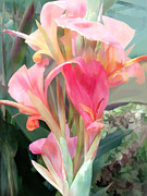 Canna Paintings - Pastel Pink Cannas by Elaine Plesser