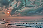 Seashore Digital Art Metal Prints - Pastel Sky with Birds Metal Print by Jeff Breiman