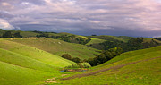 Hills Art - Pastoral California Hillside by Matt Tilghman