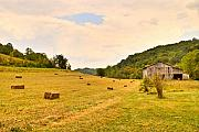 Morgan County Prints - Pastorial Framland in Kentucky Print by Douglas Barnett
