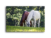 Beautiful Manes Prints - Pasture Pals Print by Brian Wallace