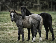 Equine Photography Photos - Pasture Partners by Gigi Embrechts
