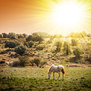Sunset Photos - Pasturing Horse by Carlos Caetano