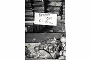 Grocery Store Originals - Patato Potatoe by Susan Snow Voidets