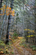 Fall Photographs Posters - Path At Panther Falls Poster by Kathy Jennings