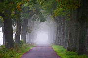 The Way Forward Posters - Path Going To Mist Way Poster by Jacglenphoto