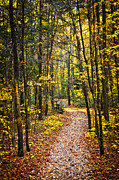 Leafy Tree Posters - Path in fall forest Poster by Elena Elisseeva