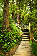 Hiking Photo Framed Prints - Path in temperate rainforest Framed Print by Elena Elisseeva
