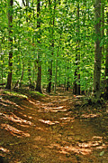 Monmouth County Prints - Path In The Woods - Holmdel Park Print by Angie McKenzie