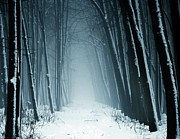 Winter Landscape Prints - Path Into Snowy Forest On Foggy Day Print by By Julie Mcinnes