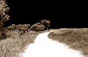 Photography Into Art Photo Prints - Path Into the Dark Print by John Rizzuto