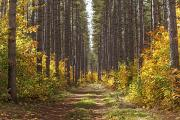 Country Dirt Roads Photo Prints - Path Into The Forest In Autumn Sault Print by Susan Dykstra