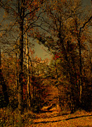 Path Into The Woods Print by Nina Fosdick