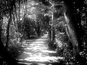 Monochrome Acrylic Prints - Path by Roberto Alamino