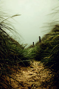 Path Through The Dunes Print by Hannes Cmarits