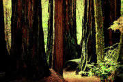 Wingsdomain Posters - Path Through The Forest Edge . 7D5432 Poster by Wingsdomain Art and Photography