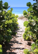Water And Plants Art - Path to Beach by Carol Groenen