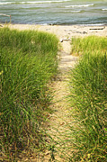 Grass Photo Framed Prints - Path to beach Framed Print by Elena Elisseeva