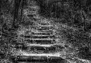 Monochrome Posters - Path to Lone Tree Bluff Poster by Scott Norris