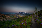 Snow Capped Originals - Path to Mt St Helens by Mark Rainer