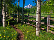 Pauls Colorado Photography Prints - Path to Pyamid Peak Print by Paul Gana