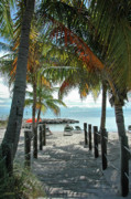 Tropical Trees Prints - Path To Smathers Beach - Key West Print by Frank Mari
