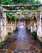 Walkways Prints - Path to the Alamo Print by Anthony Jones