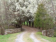 Fieldstone Photos - Pathway through Spring by Pauline Ross