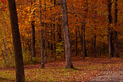 Foliage Photographs Prints - Pathway Thru The Woods Print by Robert  Torkomian