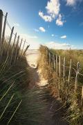 Sand Fences Framed Prints - Pathway To The Beach, Beadnell Framed Print by John Short