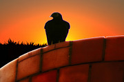 Condor  Metal Prints - Patience Metal Print by Bill Cannon