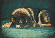 Dog Portraits Pastels Prints - Patience Print by Kay Ridge