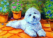 Lyn Cook - Patio Pal - Bichon Frise